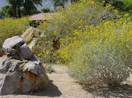boulder and rock selection u0026 placement landscaping network