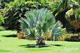 native plant nursery sydney free botanic gardens across nsw sydney