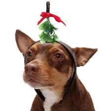 mistletoe headband mallzeetop 10 men to avoid the mistletoe