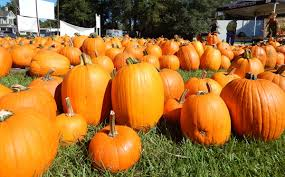 Local Pumpkin Farms In Nj by Melody U0027s Pumpkin Patch Now Open News Suwanneedemocrat Com