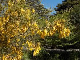 native plants nz nz native u201ckiwi gems u201d u2013 some hints about care selection and