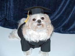 dog graduation cap dog cap and gown costume small large dogs caps gowns