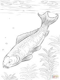 koi fish coloring page free printable coloring pages