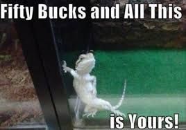 You Make Me Smile Meme - bearded dragon smile meme un furry friends pinterest smile
