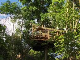 chambre d hote dans les arbres chambre d hôtes guadeloupe vacances cabane arbre insolite