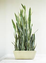 house plants no light 210 best houseplants images on pinterest houseplants indoor