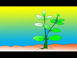 kids drawing tutorial plant youtube