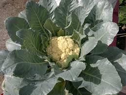 harvest indicators u2013 junior master gardener
