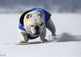 star citizen vanguard bulldog wallpapers sporty bulldogs english bulldogs get a bad rap for being lazy