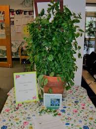 plant of the month club garden club s new project plant of the month