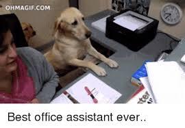 Best Office Memes - 25 best memes about best office best office memes