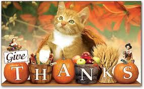thanksgiving kitten 3 mr