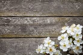 Wooden Table Top View Spring Background With Cherry Flowers On Wooden Table Top View