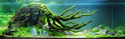 Aquarium Decoration Ideas Freshwater Magical Forest Aquarium Google Search Aquariums Pinterest