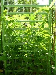 diy garden trellis ideas trash backwards blog