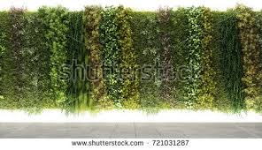 3d rendering vertical garden wall stock illustration 721031287