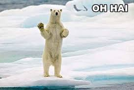 Polar Bear Meme - polar bear oh hai know your meme