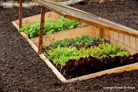 starting vegetable garden zandalus net