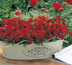 Summer Flower Garden Ideas - 51 best nepeta catmint images on pinterest flower gardening