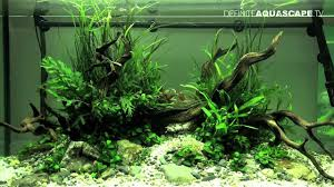 aquascaping layouts with stone and driftwood aquascaping the art of the planted aquarium 2012 part 2 youtube