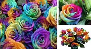 Multicolor Roses How To Make Rainbow Roses A Step By Step Guide Hubpages