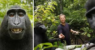 photographer broke due to copyright lawsuit by monkey