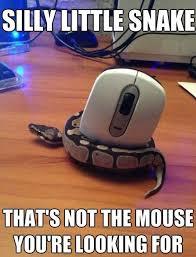Silly Meme - silly little snake jpg