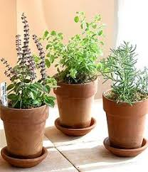 Potted Plants Wedding Centerpieces by Party Decor Green Herbs Pesquisa Google Noite De Caldos