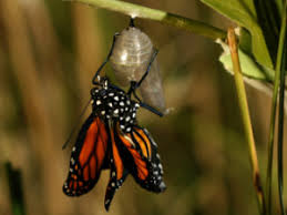 exiting the cocoon the butterfly larry kesslin