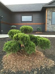 Pom Pom Trees Beautiful Green Yard Landscaping Design Ideas With Shrubs And