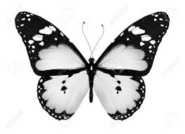 white butterfly stock photos royalty free business images