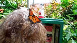 phipps conservatory butterfly garden closeup of two butterflies