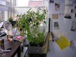 sweet basil indoor herb garden ideas 340 hostelgarden net