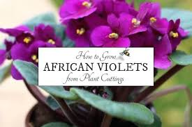 african violet grow light african violet plant light stand how to grow violets gardeners