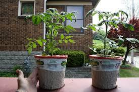Self Water Pot Pittsburghgardener Self Watering Veggie Pot Experiment