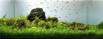 Aquascape Filter The 10 Best Freshwater Aquarium Plants For Beginners Aquascape