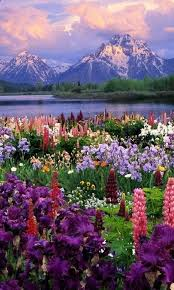 Pictures Of Beautiful Flowers In The World - best 25 flowers ideas on pinterest pretty flowers flower