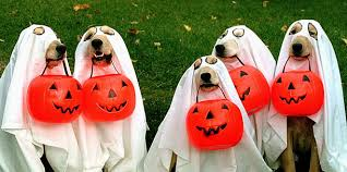 Dogs Halloween Costumes 10 Halloween Costume Ideas Dogs Dog Tag Art