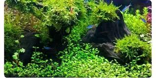 marineland aquatic plant led lighting system w timer 48 60 freshwater plant led aquarium lights pek plnt nd th enhncing
