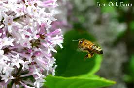 romancing the queen keeping backyard bees