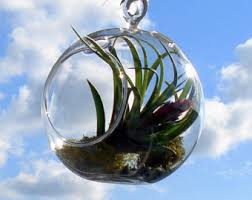 air plant hanging terrarium clear glass orb globe kit with moss