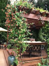 Pictures Of Pergolas In Gardens by 15 Best Climbing Plants For Pergolas And Arbors Pergolas Small