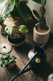 281 best la garden images on pinterest plants green plants and