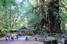 Henry Cowell State Park Map by Redwoods In Henry Cowell State Park California Momentum Travels