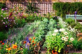 vegetable garden in late summer herbs flowers and vegetables