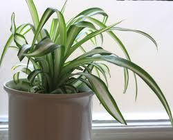 adorable good plants that filter air home similiar good plants
