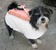 Cute Dog Halloween Costumes 15 Halloween Dog Costumes Images Dog Halloween