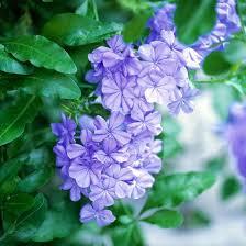 Flowers In Denton - 81 best full sun plants for pots images on pinterest flower
