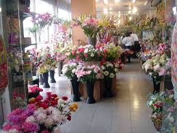 Flower And Bird - flower bird market in kunming of yunnan