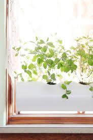 best 25 indoor herb planters ideas on pinterest mason jar herbs